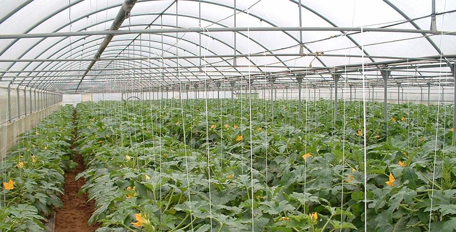 agricultura-6